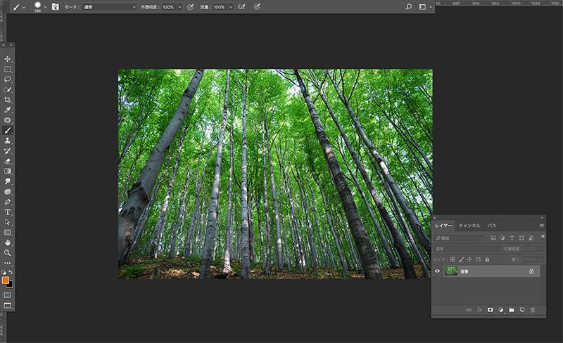 PhotoShopで開いた森の画像