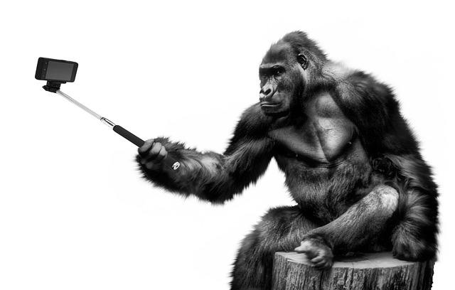 """WP-Gorilla"""