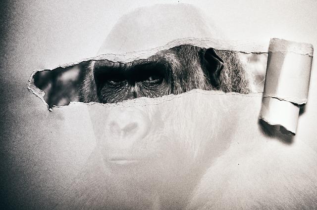 """""""Monkey"""""""